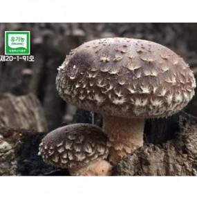 [추석맞이 인기상품] 숲이키운 정남진 장흥 참나무원목 표고버섯 3종세트 이미지